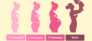 Stages Of Pregnancy In Each Trimester